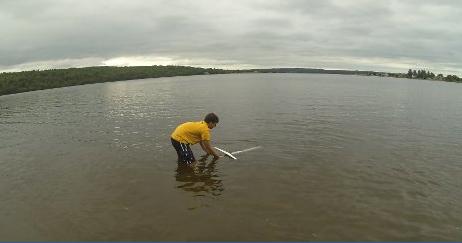 BRIAN SURF